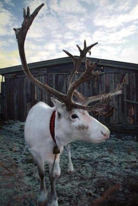 Животные, следующие сезонной моде
