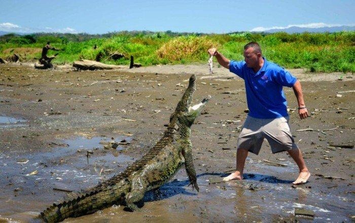 Крокодиловое сафари в Коста-Рике
