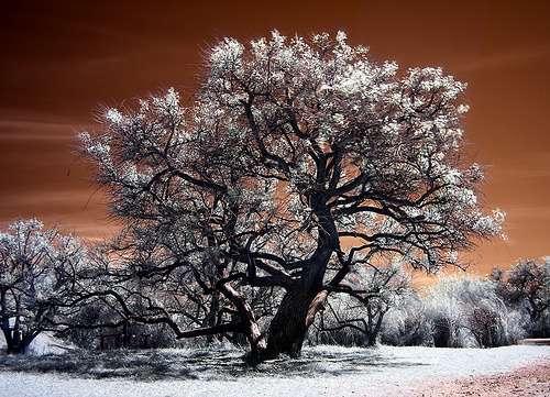 Инфракрасные фотографии